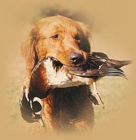 получение охотничьего билета